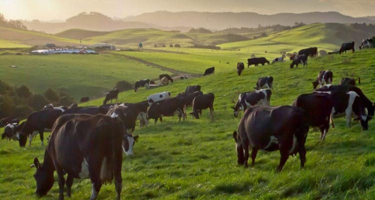 Diferencias entre leche orgánica y leche convencional