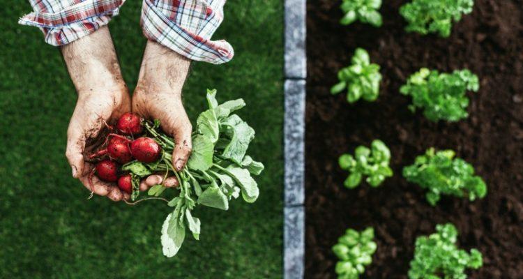 ¿Sabes la diferencia entre orgánico, ecológico, biológico y sostenible?