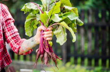 10 tips sobre los alimentos orgánicos